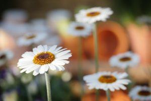 növény webáruház